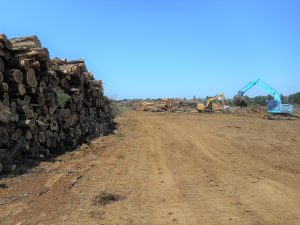 茨城造成伐採工事
